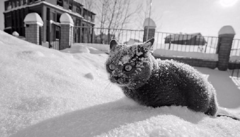 Ой, мороз, мороз… Синоптики сообщили критический прогноз погоды на осень, еще такого в Украине не было