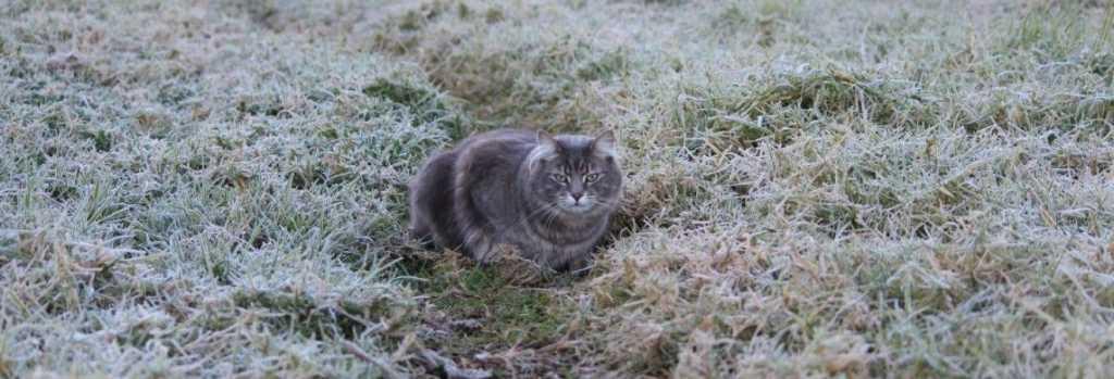 «Одевайтесь теплее»: Львовян предупреждают о значительном похолодании на выходных