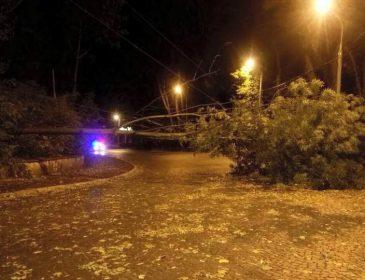 «Поваленные деревья, порваны электропровода»: Ураган во Львове натворил настоящего бедствия. Последствия (ФОТО)