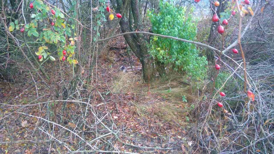 «Нашли зарезанным в лесопосадке»: жестокое убийство второклассника в Харьковской области