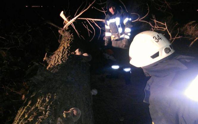 «Получила смертельные травмы …»: На Киевщине дерево убило женщину