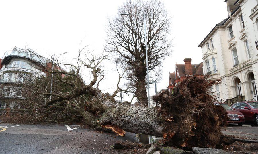 Украинцев предупреждают о мощном шквале: деревья будет вырывать с корнем
