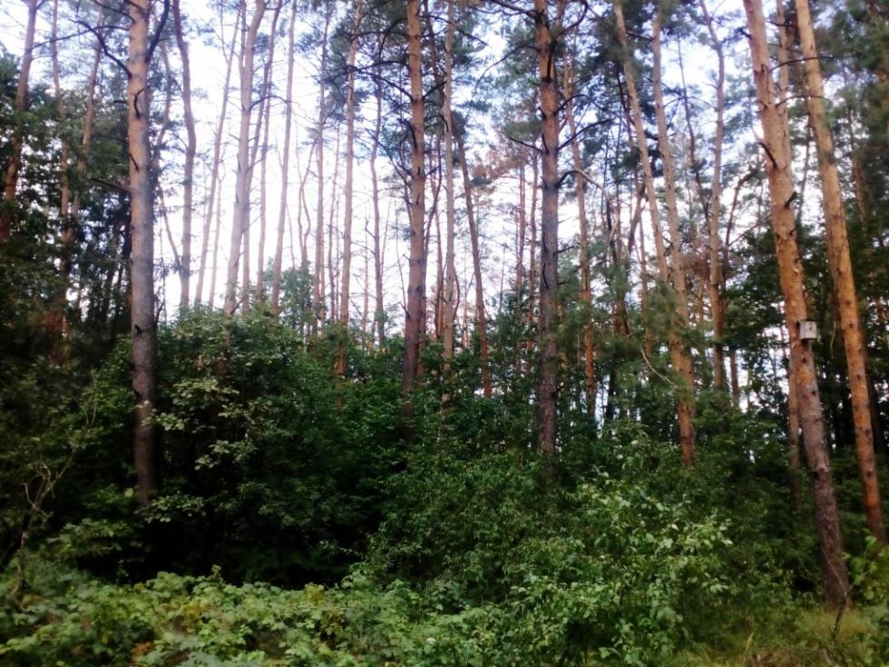 «А потом раздели и даже без нижнего белья»: Семеро мужчин похитили ребенка, вывезли в лес, а потом отпустили