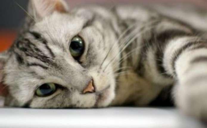 Есть домашний любимец? «Штраф от 5,1 до 20,4 тыс. грн»: в Украине введут налог на кошек и собак