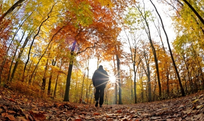 В Украину придет потепление: В отдельных регионах до 16 градусов тепла