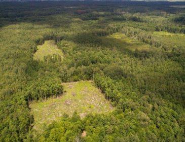Под Киевом чиновиники «воюют» за лес, а страдают «простые смертные»