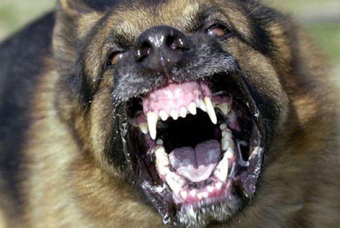 «Они выполнили свою работу…»: Женщину насмерть загрызли собаки прямо на улице