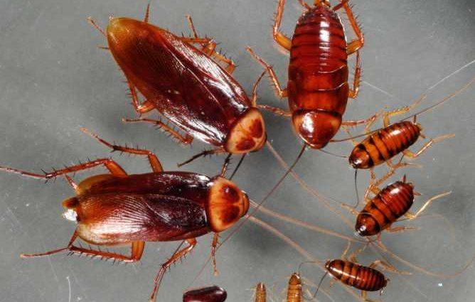 «Приятного аппетита!»: В Житомире в супермаркете «Сильпо» тараканы разгуливают прямо на полках с хлебом
