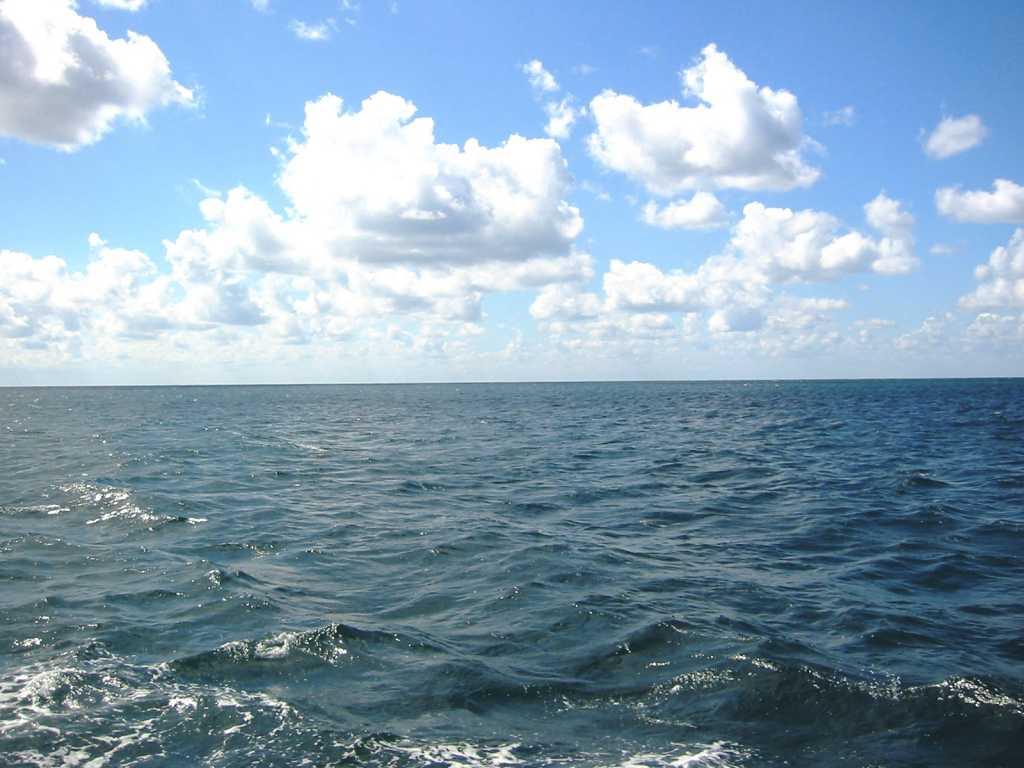 «Умирают от голода, нет даже хлеба»: моряки подают сигнал SOS с парохода в Черном море