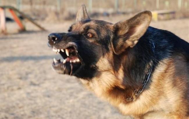 Погибла на месте! На Днепропетровщине женщину загрызла собака у ее собственного двора