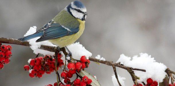 Какой будет погода на новогодние праздники? Синоптики сделали прогноз, который вас точно удивит