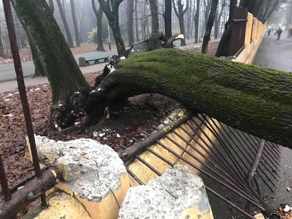 Будьте осторожны! На Полтавщине мужчину убило дерево