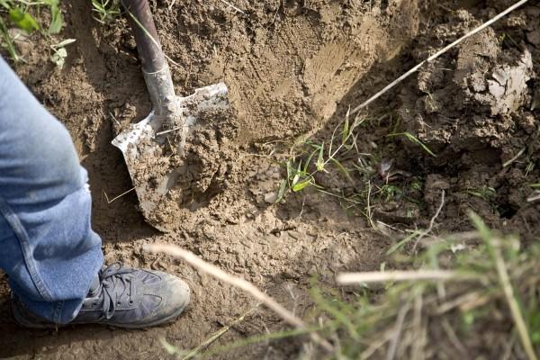 «Прыгали по туловищу и шее жертвы»: Группа мужчин хладнокровно убили товарища, а тело закопали во дворе