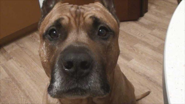 «На глазах у детей жестоко убил собаку …»: Полиция задержала бездомного