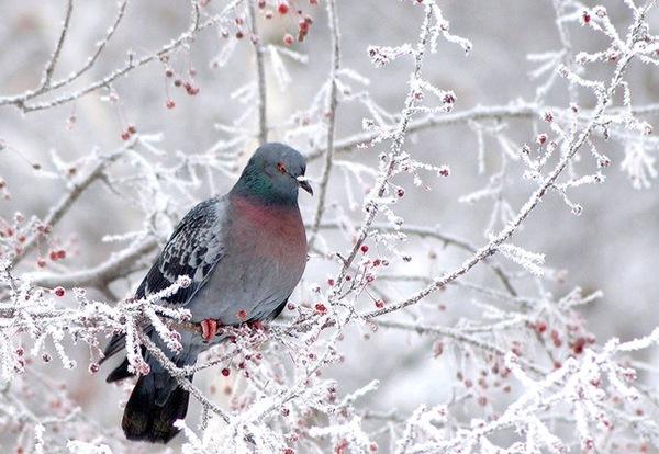 Сильные морозы и снегопады: Чем еще погода удивит украинцев завтра