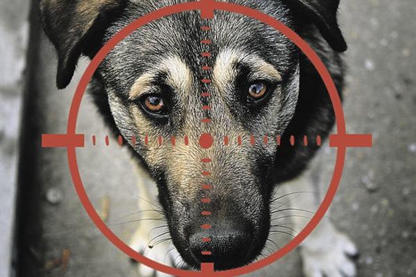 «Стрелял по собаке на глазах у ребенка»: Стало известно, какой приговор вынес суд преступнику