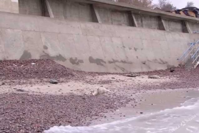 «На пляже обнаружили тело»: В Одессе нашли труп 20-летней девушки