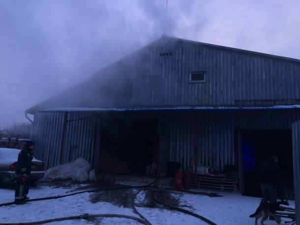 Неприятный запах и столбы дыма: Под Киевом на птицеферме сгорели сотни тысяч кур