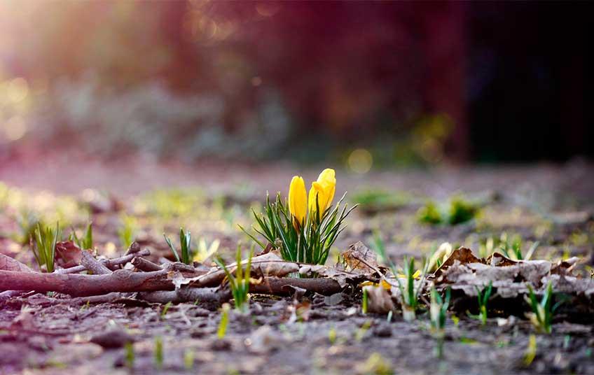 «Наступила новая эпоха, новый «планетарный день»: Украинцам сообщили какими будут весна и лето, уже давно такого не видели
