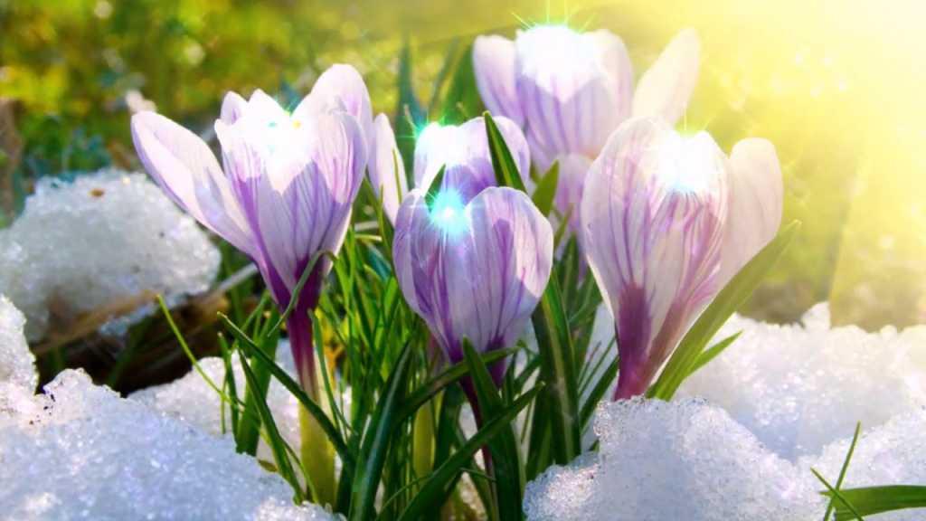 За окном уже почти весна! Синоптики рассказали о значительном потеплении и вот когда это произойдет