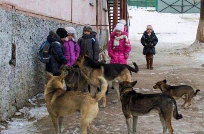 «Когда ребенок возвращался из школы»: Стая бродячих собак растерзала 6-летнюю девочку