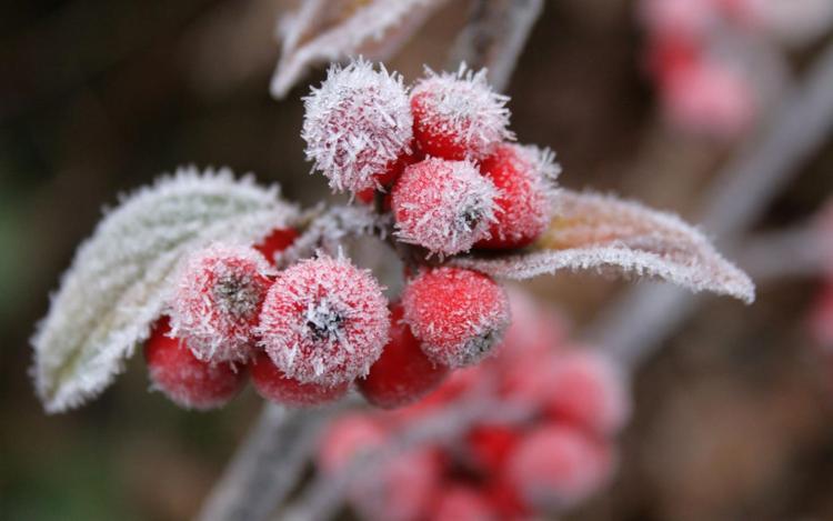 «Снегопады заканчиваются, а морозы…»: Какой будет погода в Украине завтра