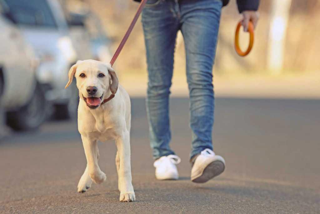 «Штрафы не менее 1000 гривен»: Что ждет владельцев собак из-за нового закона