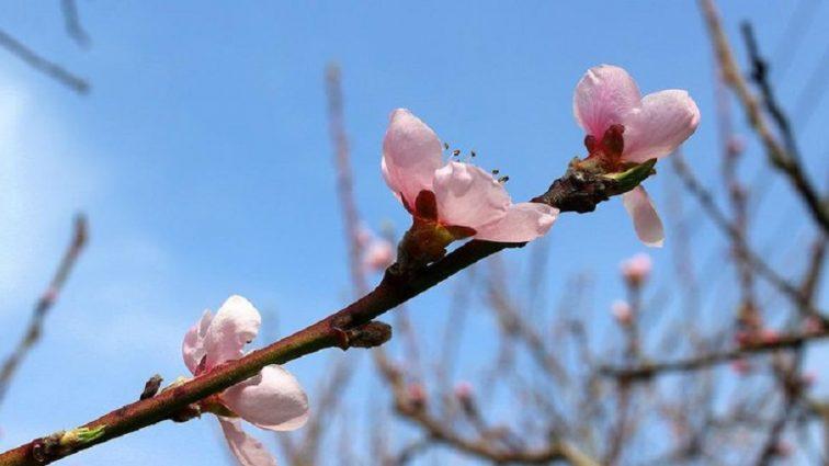 Капризная весна: Синоптики рассказали, какой погоды ожидать завтра