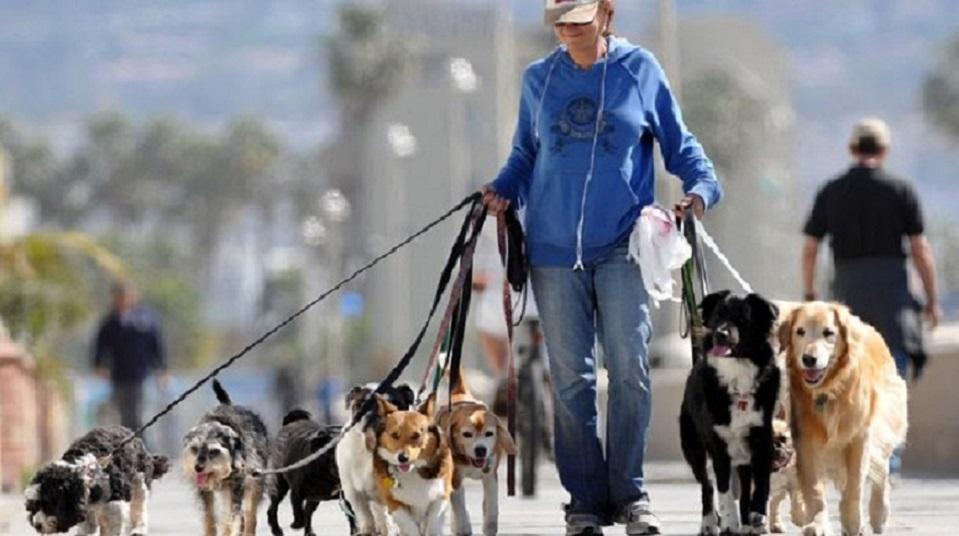 «Штрафы, запреты и обязательная регистрация»: Новый закон, который сильно осложнит жизнь владельцев домашних животных