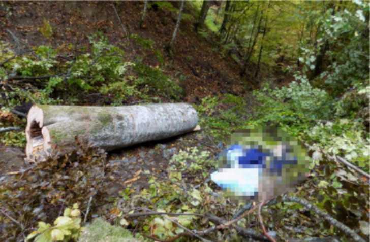 «Поймал ее в лесу и изнасиловал …»: Отец потерпевшей задержал насильника своей дочери