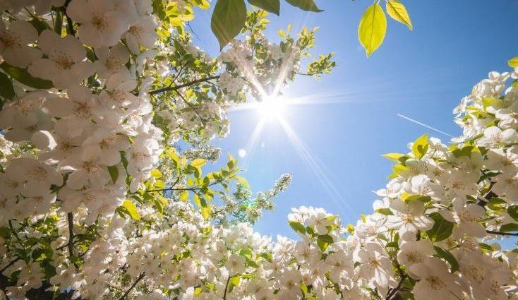 Температура достигнет до летних +24, однако…: Чем удивит погода 23 апреля