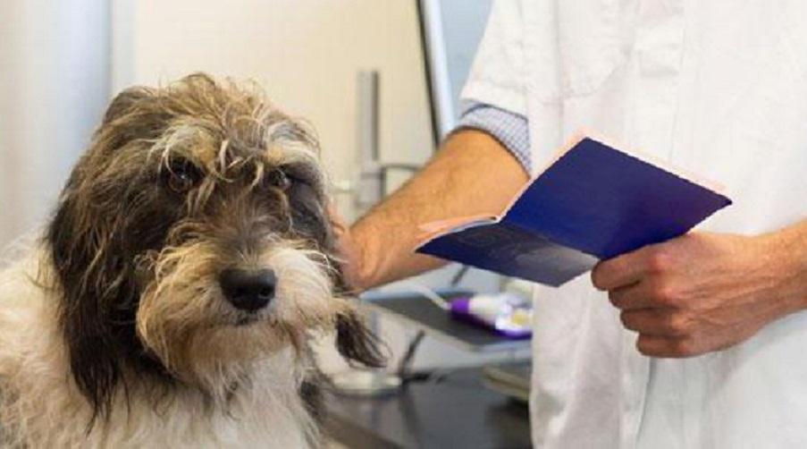 «Нужно будет оформить …»: Новые правила на перевозку домашних животных