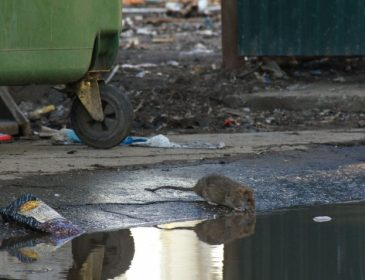 Ужасная смерть пенсионерки: Тело сгрызли крысы