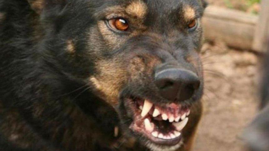«Врагу не пожелаю пережить…»: В Бердянске свора бродячих собак напала на мать с ребенком