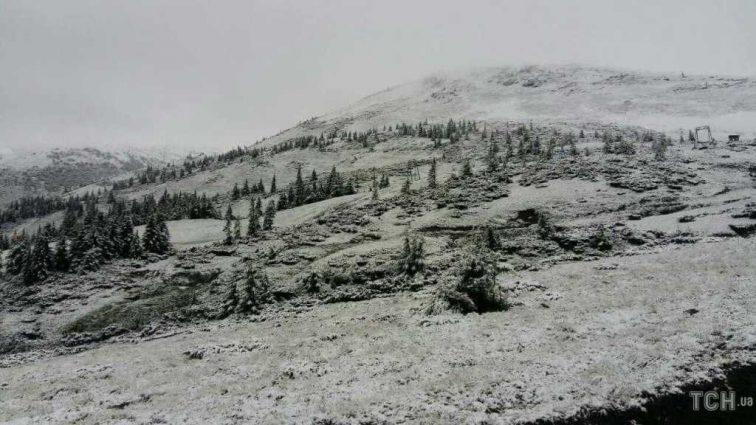 «Деревья, кусты и землю покрыло толстым слоем»: В разгар лета Карпаты засыпало снегом (ФОТО)