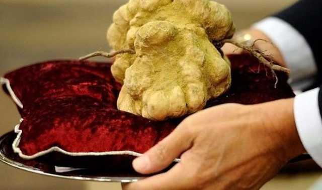 «До $10000 за килограмм»: В Винницкой области мужчина в лесу сделал потрясающее открытие