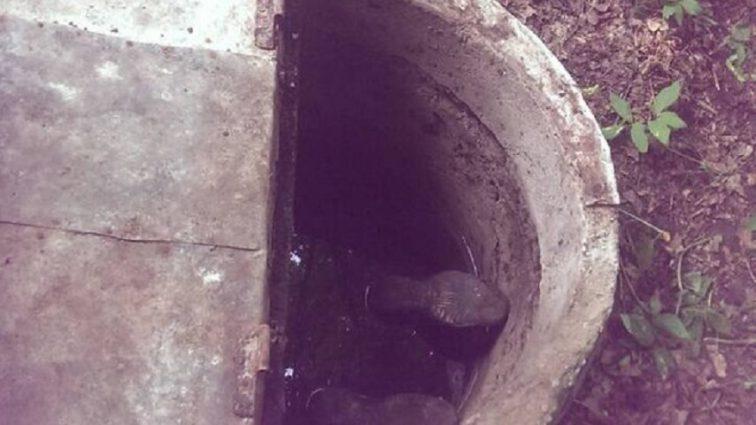 «Уже был без признаков жизни…»: В Киевской области мужчина утопился в колодце