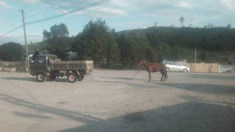 «Привязал коня к автомобилю и совал по асфальту»: Жестокое обращение лесничего с животным возмутило украинцев