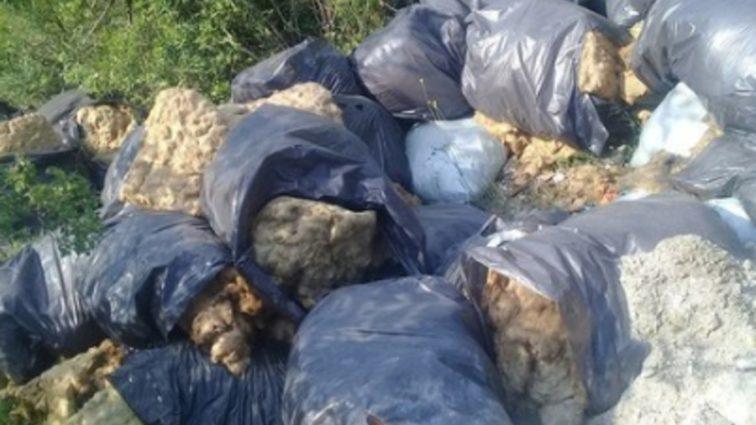 Реки фекалий и горы мусора: В Сети активно обсуждают курортную зону Украины