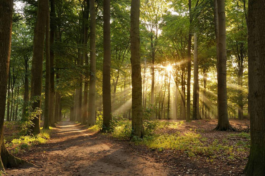 В лесу на Буковине нашли пропавшую полтора месяца назад путешественницу из Германии