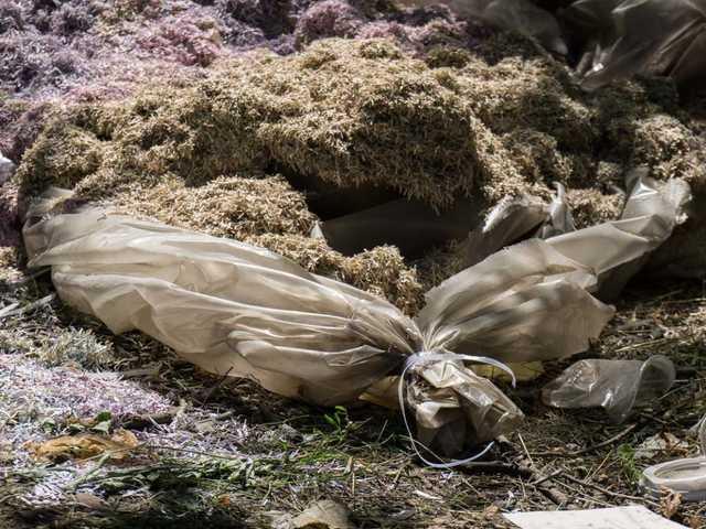 «Десять мешков с украинскими купюрами»: В лесопосадке возле Днепра нашли потрясающую находку