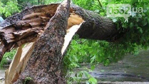 Пострадала целая семья: В Полтавской области, из-за урагана на детскую площадку упало дерево