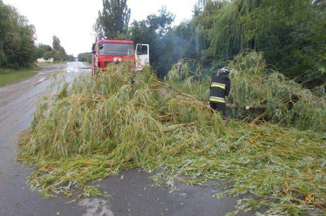 Сильные ливни на западе Украины: ветер ломал деревья и сносил крыши