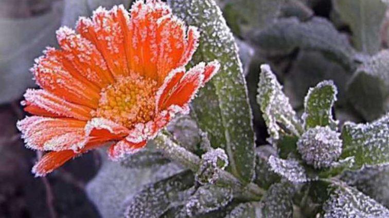 Заморозки наступят раньше: какую погоду обещают синоптики украинцам в конце лета и осенью