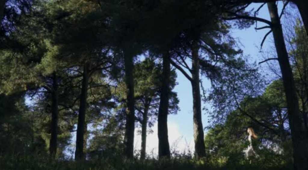 «Звал на помощь, но его никто не слышал»: 8-летний малыш всю ночь бродил в лесу