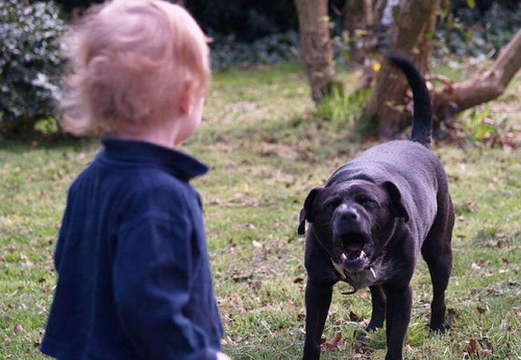 «Возле подъезда»: В Николаеве бродячая собака вцепилась в лицо 4-летнего ребенка
