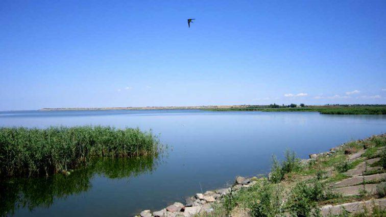 «Он переносит чуму»: В украинских озерах обнаружили опасную существо