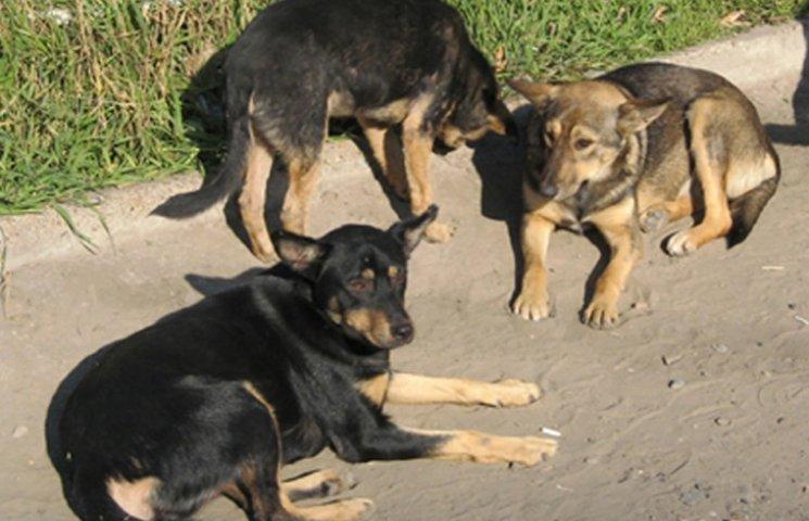 Кусали за ноги и спину: На Киевщине возле собственного дома на женщину напала стая бешеных и бездомных собак