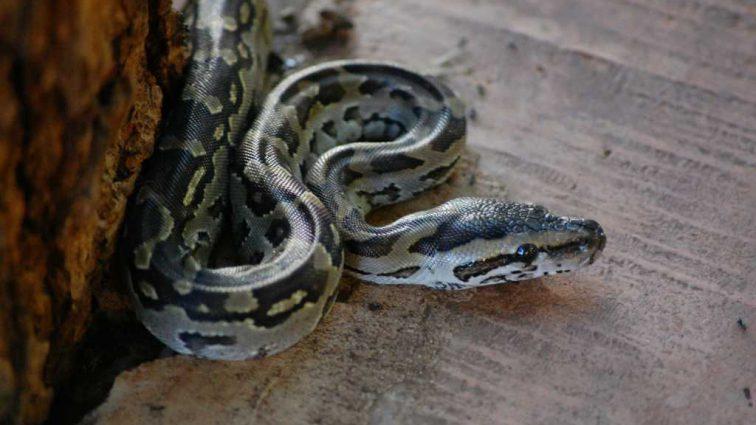 3 дня боролись за ее жизнь: Во Львове умерла 4-летняя девочка, которую укусила змея