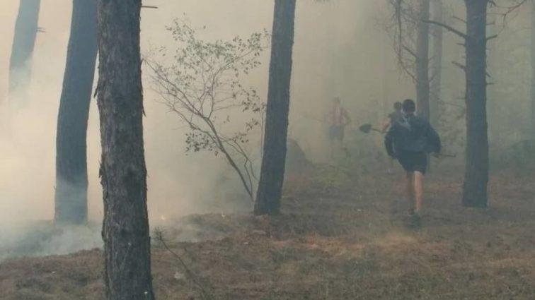 Площадь возгорания достигла 3 гектаров: В Украине вспыхнул лес, тушение продолжается несколько часов